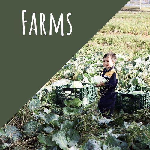 kids on farm field